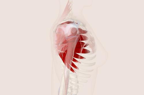 前鋸肌位置