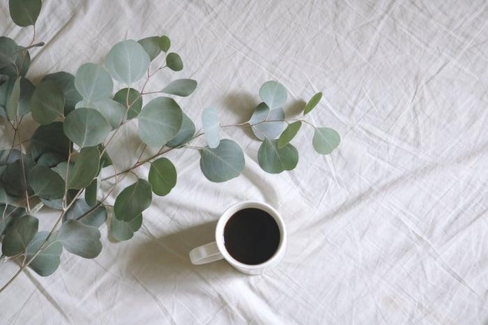 尤加利樹也稱桉樹,就是無尾熊的主食,葉片可拿來做精油,