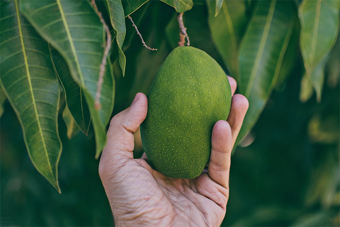 吃芒果 要把皮洗乾淨