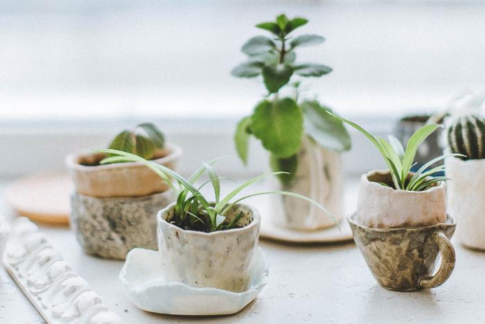 遠離室內空汙傷害-培育植物