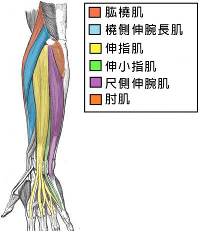 拳頭力量決定生命長短?6動作加強握力健康又長壽!前臂肌肉