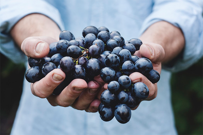 同樣使用葡萄釀造,為什麼會有葡萄酒、巴薩米克醋兩種不同的食物出現呢?