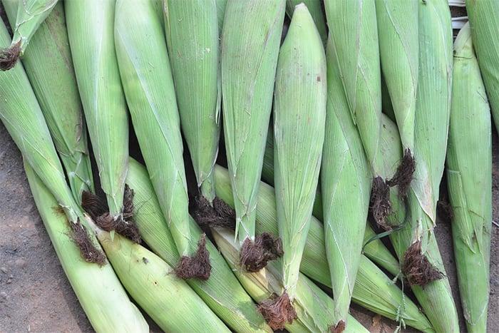 玉米筍怎麼挑