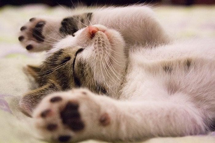 睡好睡滿睡飽