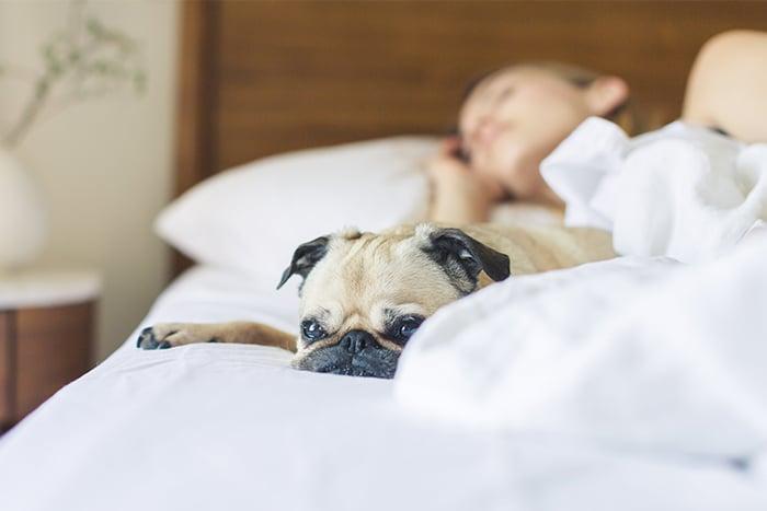 起床不要滑手機 陪毛小孩 狗