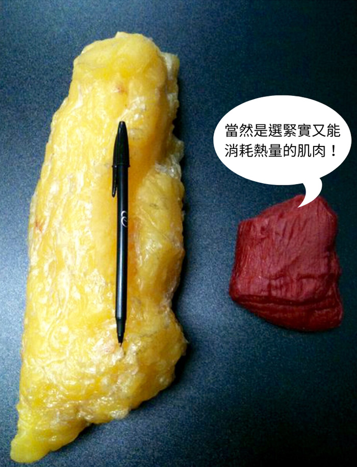 脂肪與肌肉體積比較