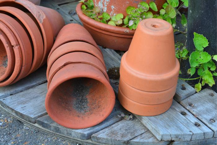 做好護措施 遠離蟲蟲危機!定時清理積水容器