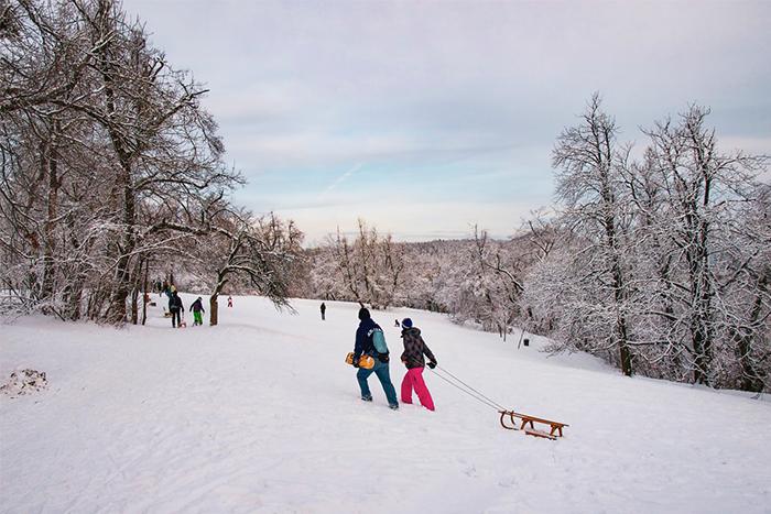 推雪橇運動健身入門者也能迅速上手
