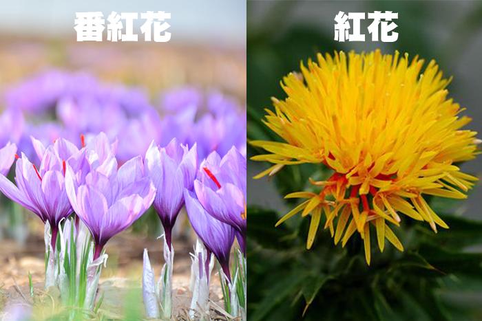 紅花和番紅花比較