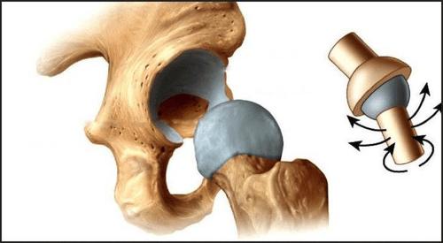 人體關節中活動度最大的就是肩膀,屬於小而靈活的球窩關節,可以多方向動作、運動幅度大,但相對來說肩關節的穩定性較小,因此很容易受傷,
