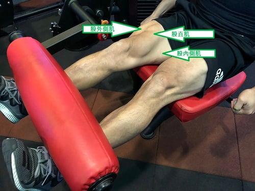 腿部股四頭肌圖解