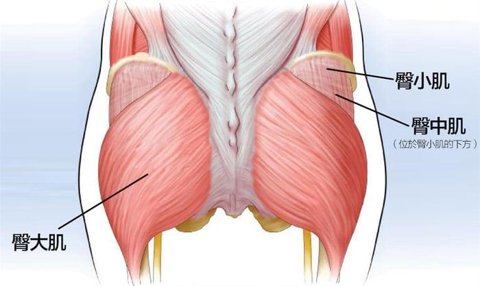臀部肌肉 臀大肌 臀中肌 臀小肌