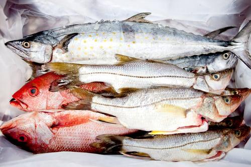 白肉魚是精瘦蛋白