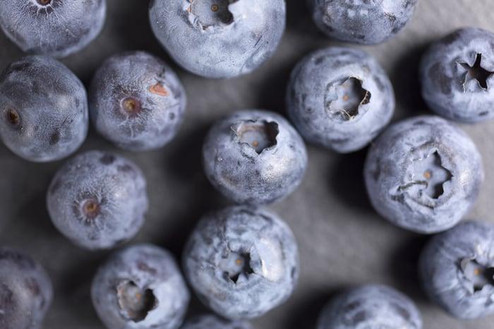 藍莓 抗氧化 抗老化 養顏美容 減肥瘦身 幫助排便 延緩記憶力衰退