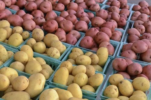 馬鈴薯、地瓜熱量和澱粉質都不低,還是比較建議做為早餐或午餐主食食用。