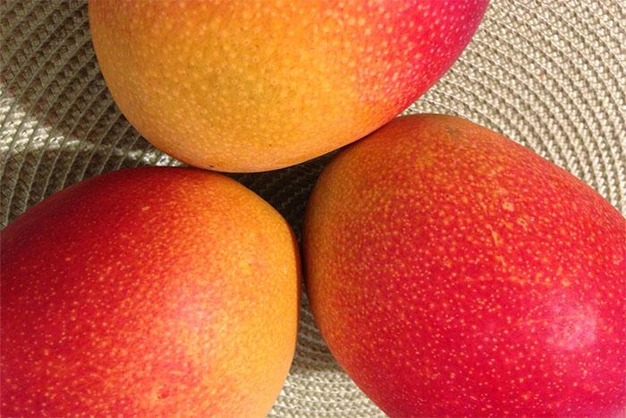 mango cover-1