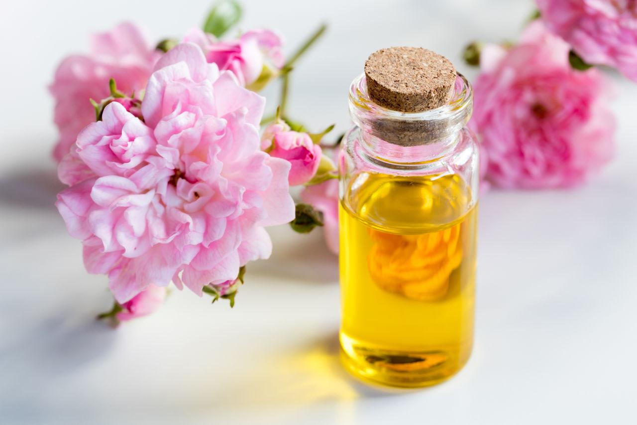 苦茶油被譽為東方橄欖油