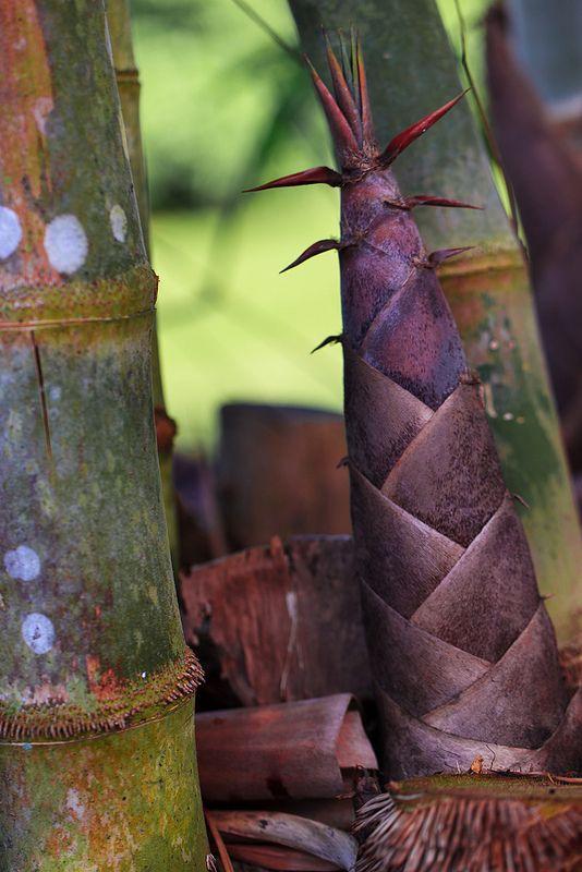 你知道竹筍是竹子的哪個部位嗎?公布正確答案,就是「芽」!其實大多植物的芽都含有豐富營養,因為要提供整株植物生長所需的能量,例如:玉米筍、豆芽…等,當然,竹筍的營養價值也很高,對促進身體健康有6大幫助!